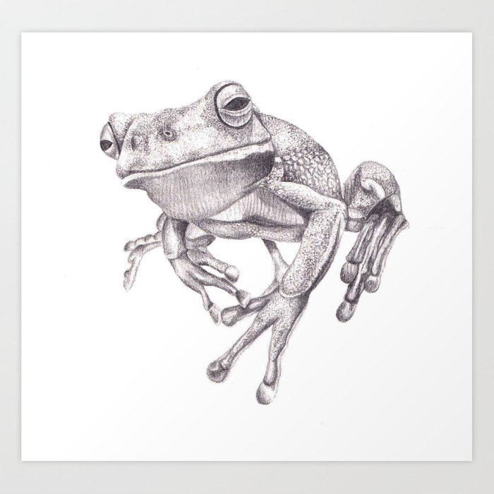 Realistic Tree Frog Drawings Pencil Drawing ...
