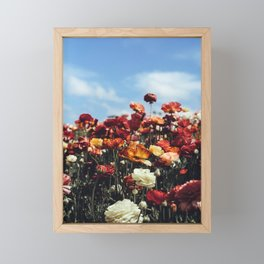 Colorful Field of Red and Orange Flowers - Flower Photography - Floral Photography - Flower Art - Floral Art - Unique Flower Photo Framed Mini Art Print