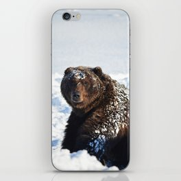 Alaskan Grizzly in Snow iPhone Skin