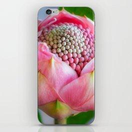Delicate Pink Bud Waratah Flower iPhone Skin
