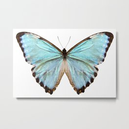 blue butterfly species Morpho portis thamyris Metal Print