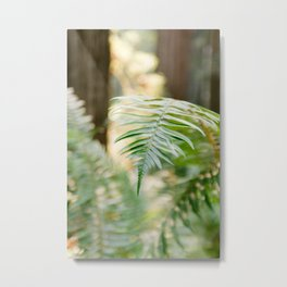 Fern Beneath the Redwoods Metal Print