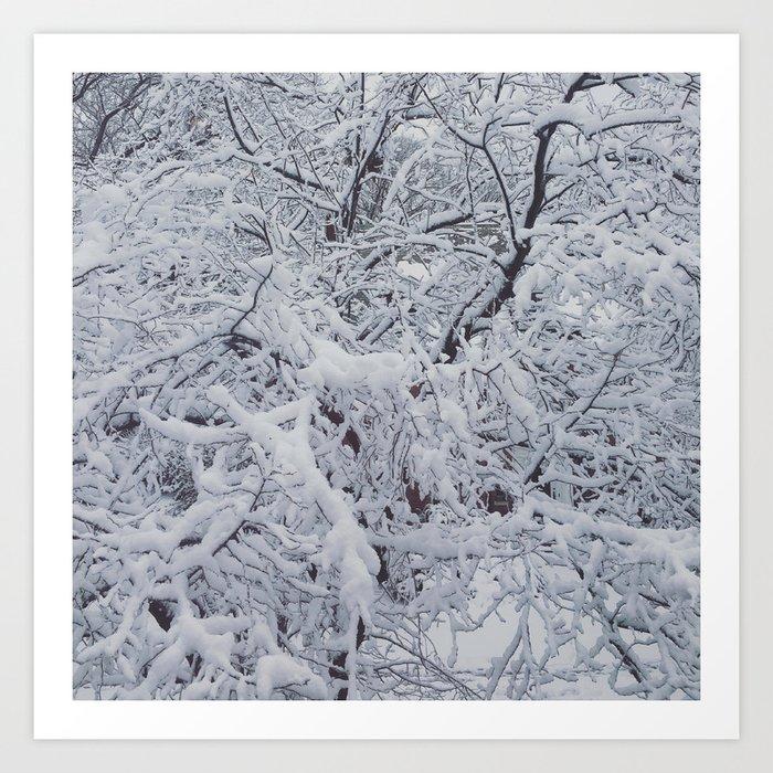 Snowy Branches Art Print