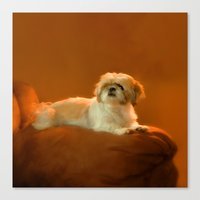 shih tzu Canvas Prints featuring Shih Tzu by ThePhotoGuyDarren