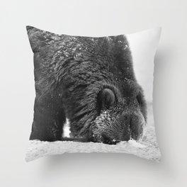 Alaskan Grizzly Bear in Snow, B & W - 2 Throw Pillow