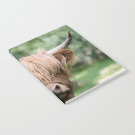 Scottish Highland Cattle with Forest in Background – Animal Photography Notebook