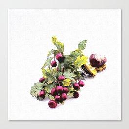 Rowan (Sorbus aucuparia L., Pyrus aucuparia Syn, Gaertner) Canvas Print