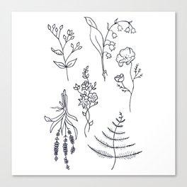 Lavender, Ferns, & Wildflowers Illustration Canvas Print