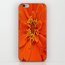 Orange Petals iPhone Skin