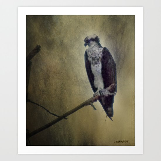 The Young Osprey Art Print