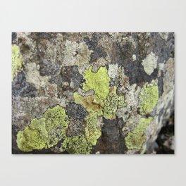 Lichen Canvas Print