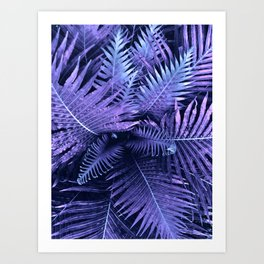 Purpple Ferns Art Print