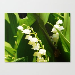 Sweetly spreading Canvas Print