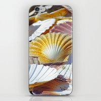 shells iPhone & iPod Skins featuring Shells by jacqi elmslie