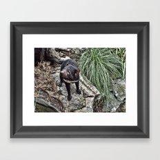 Tazzy Devil Framed Art Print