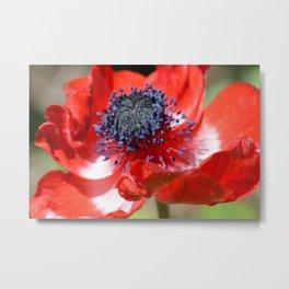 Red Anemone Flower  Metal Print