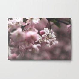 Blossom Metal Print