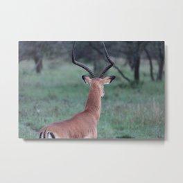Impala whorl Metal Print