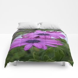 Purple and Pink African Daisy Flowers Comforters