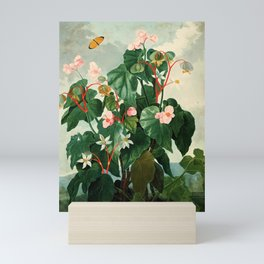Pink Floral The Oblique-Leaved Begonias : Temple of Flora Mini Art Print