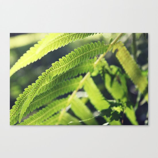 Simple Fern Canvas Print