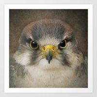falcon Art Prints featuring Falcon by Pauline Fowler ( Polly470 )