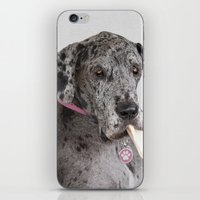great dane iPhone & iPod Skins featuring Great Dane by Deborah Janke