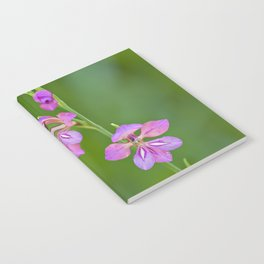 Beauty in nature, wildflower Gladiolus illyricus Notebook