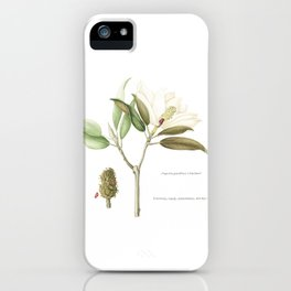 """Flowering """"Little Gem"""" Magnolia Tree iPhone Case"""