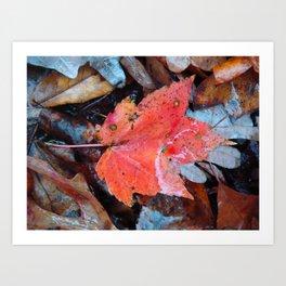 autumnal reverie 646 Art Print