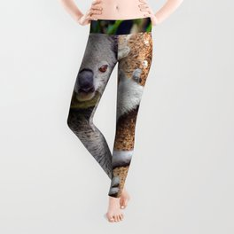 Australian Koala Bear Photo Leggings
