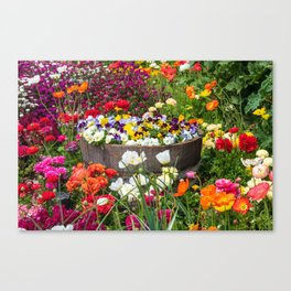 Bright flowers inside a wooden pot Canvas Print