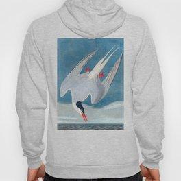 Arctic Tern Bird Hoody