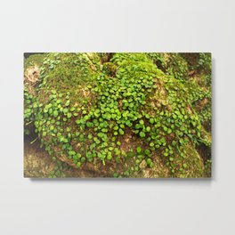 Moss is slow life Metal Print