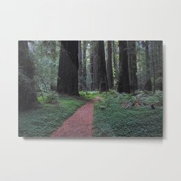 Avenue of the Giants - Redwood National Park Metal Print