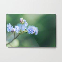 Brunnera Macrophylla - Siberian Bugloss Metal Print