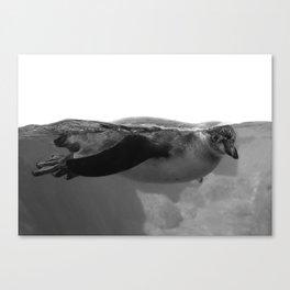 Black and White Penguin Canvas Print