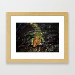 Caiman Lizard Framed Art Print