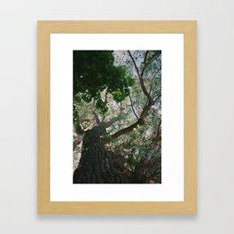 Consistant growth Framed Art Print