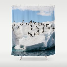 Gentoo Penguin playtime at your local iceberg Antarctica Shower Curtain