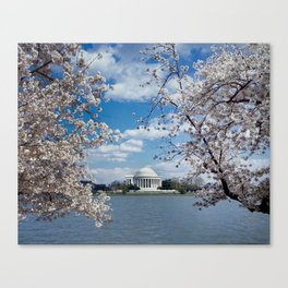 Thomas Jefferson Memorial with Cherry Blossoms  Canvas Print