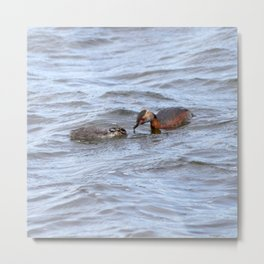 Watercolor Bird, Horned Grebe 01, Lake Myvatn, Iceland Metal Print