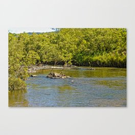 Beautiful river in the tropics Canvas Print
