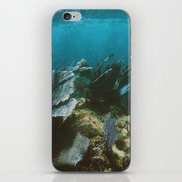 Mexican Caribbean Sealife iPhone Skin