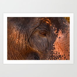 Gentle and Wise Art Print