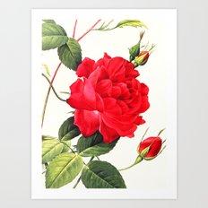 IX. Vintage Flowers Botanical Print by Pierre-Joseph Redouté - Red Rose Art Print