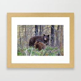 Sow & cub in Jasper National Park | Canada Framed Art Print