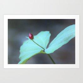 Trillium Seed Art Print