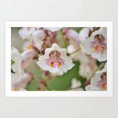 Blooming Chestnut Art Print