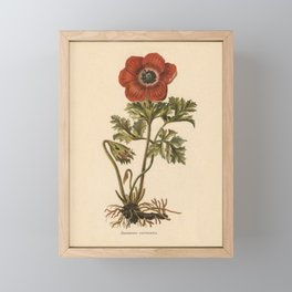1800s Encyclopedia Lithograph of Anemone Flower Framed Mini Art Print
